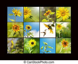collage., 向日葵