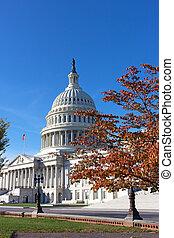 dc, 團結, 州議會大廈, 秋天, 華盛頓, 圓屋頂, 國家, usa.