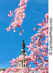 dc., 藍色, 團結, 州議會大廈, 雕像, 櫻桃, 頂部, 華盛頓, 建築物, 針對, 國家, 可見, 飛機, 花, 自由, 清楚的天空