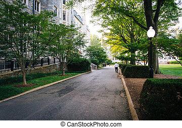 dc., georgetown, 建筑物, 大學, 華盛頓, 人行道
