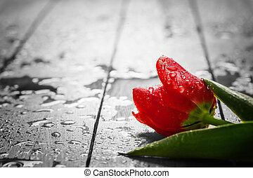 dew., 新鮮, 郁金香, 花, 潮濕, wood., 紅色, 春天, 早晨
