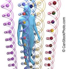 dna, 科學, 人, 基因, 人類, 3d