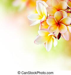 flower., 赤素馨花, 熱帶, 設計, plumeria, 礦泉, 邊框