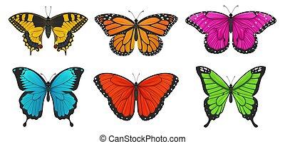 illustration., 集合, 鮮艷, butterflies., 矢量
