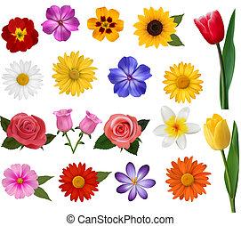 illustration., 鮮艷, 大, 彙整, flowers., 矢量