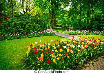 keukenhof, 荷蘭, 花園, 樹。, 郁金香, 花
