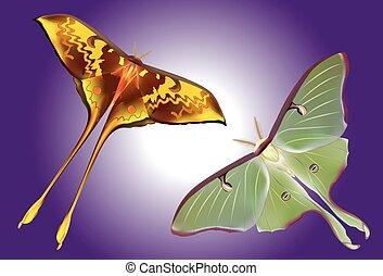 moth, 美麗, 集合, luna