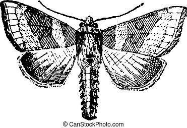 moth, 雕刻, 葡萄酒