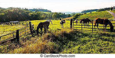 pennsylvania., 農場, 柵欄, 約克, 領域, 縣, 馬