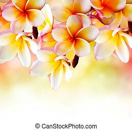 plumeria, 熱帶, flower., 邊框, 設計, 礦泉, 赤素馨花