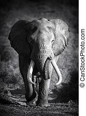 processing), 大象, (artistic, 公牛