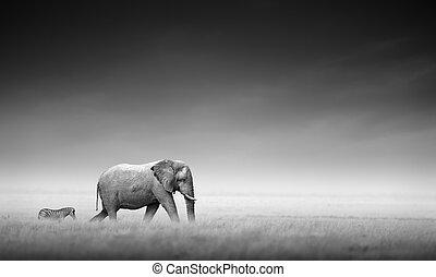 processing), (artistic, zebra, 大象