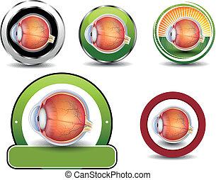 section., 眼睛, 彙整, 產生雜種, 符號, 眼科學, 人類