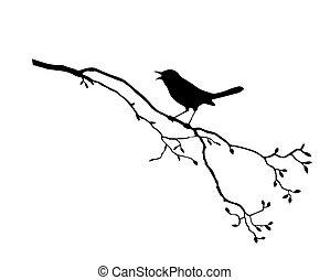 t, 鳥, 分支, 黑色半面畫像