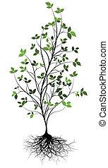 w, 在上方, 樹, 矢量, gree, 根
